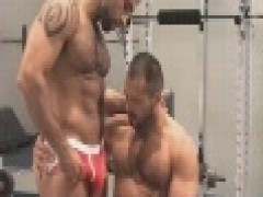 Muscle Bears In Gym