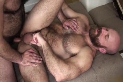 hairy Bear bare And cumshot