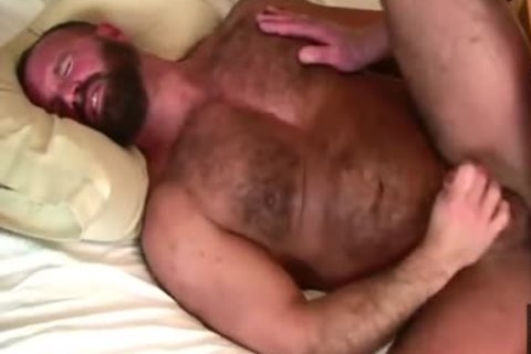 Daddy Bears plow In bed