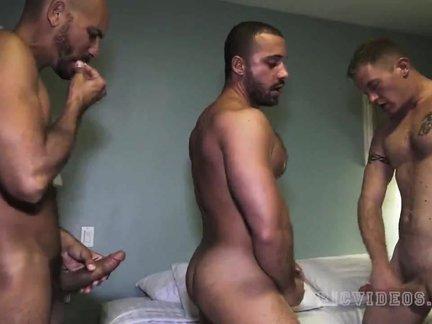 homo BB 011