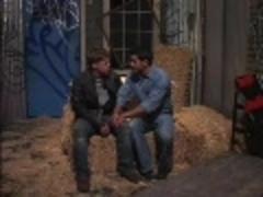 gay Cow dudes