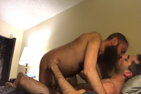 hairy lengthy Bearded Otter Kisses And engulf His hairy bf