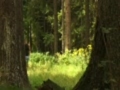 Stright mans In Tthis chab Woods